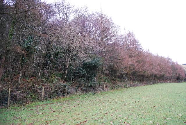 The edge of Perley Wood