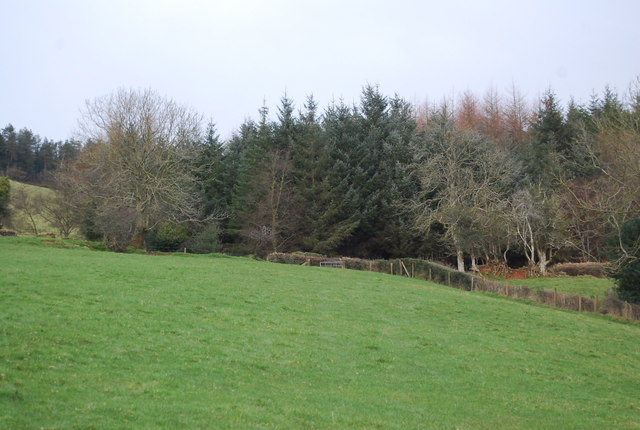 The edge of Monkham Wood