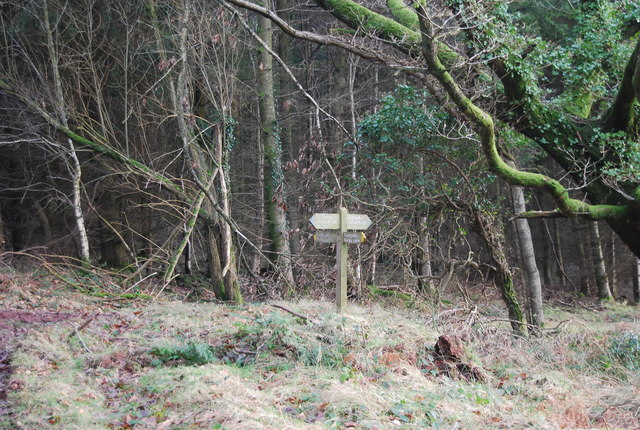 Footpath junction, Monkham Wood