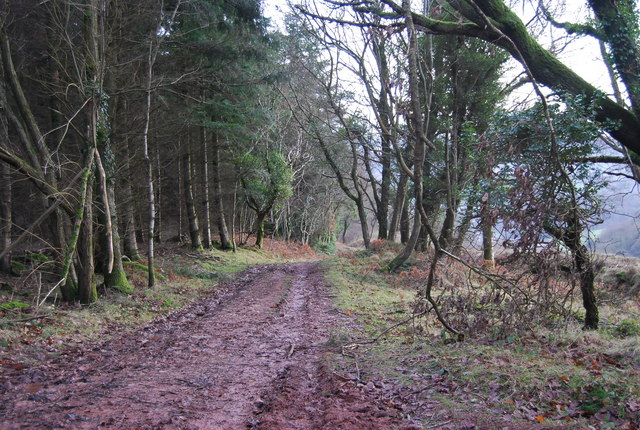 Path down through Monkham Wood