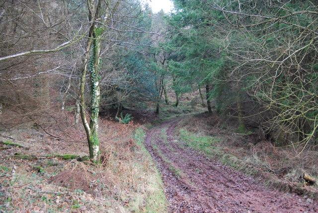 Track up through Monkham Wood
