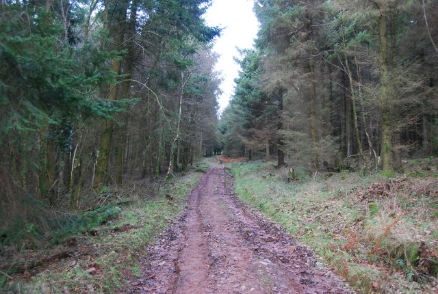 Track in Monkham Wood