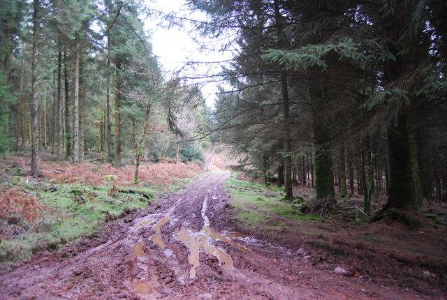 Muddy track, Monkham Wood