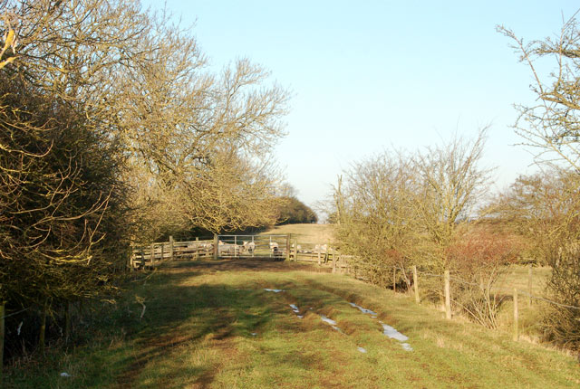 North to sheep pasture on the bridleway to Onley Fields