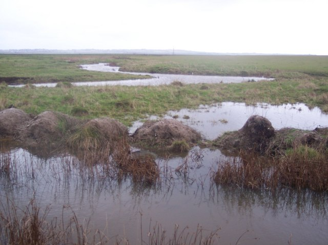 Dykes in Minster Marshes