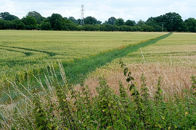 Crops south of Mortimer