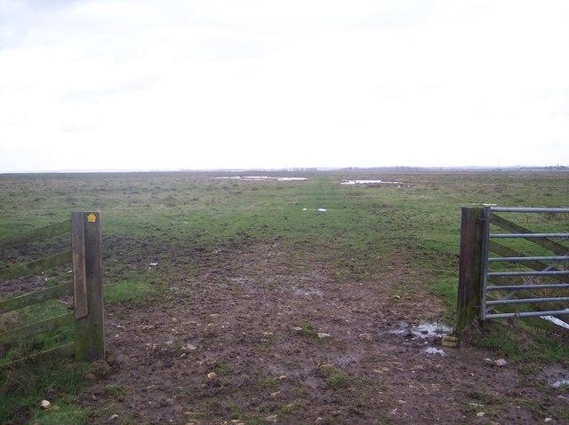 Footpath across Elmley Marshes