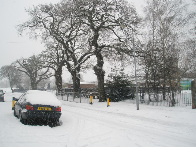 Winter trees in Hooks Lane