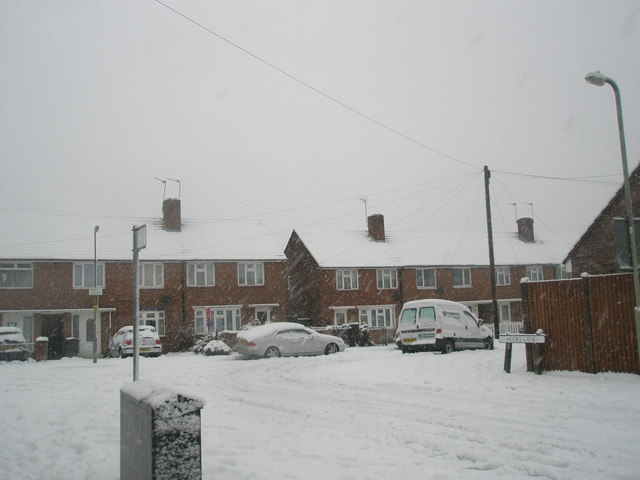 Looking from Hooks Lane into a snowy Ibsley Grove