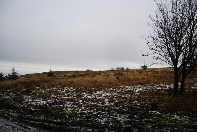 Moorland on Withycombe Common