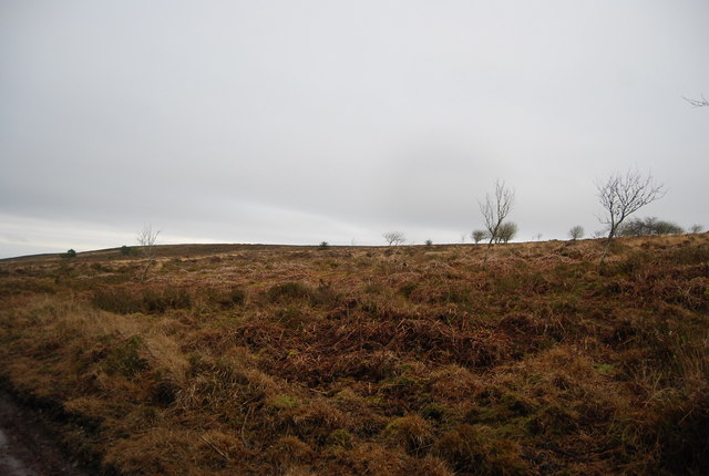 Moorland, Withycombe Common