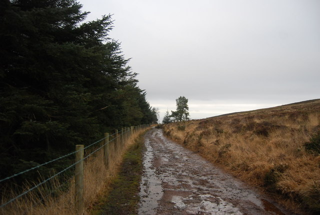 Track follows the moorland / woodland boundary