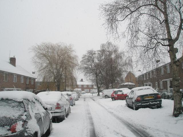Looking eastwards along a snowy  Ibsley Grove