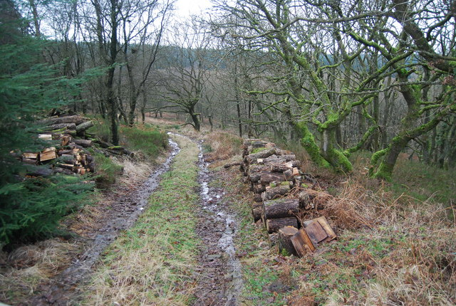 Logs by a track, Withycombe Scruffets
