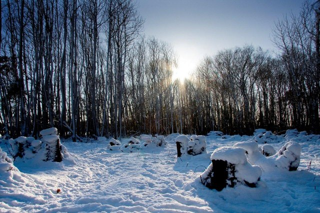 Snow in Kent December 2009