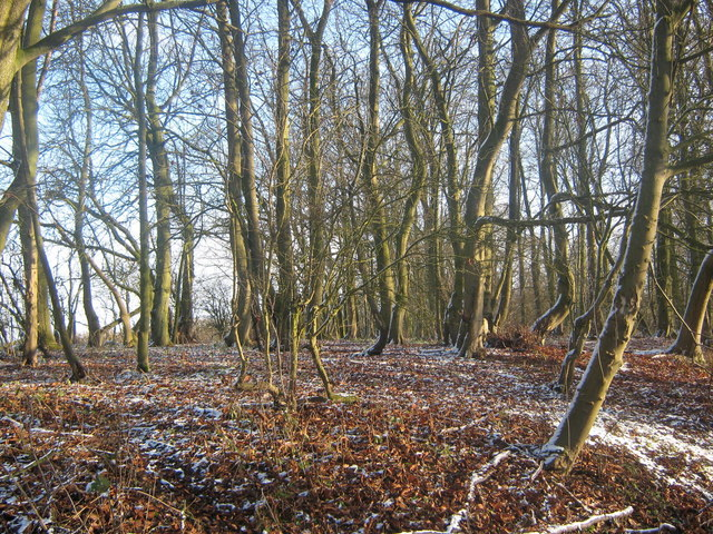 Bratt Wood near Nunburnholme, East Riding, Yorkshire
