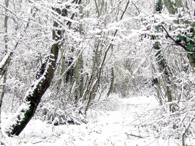 Winter wonderland - Oatclose Plantation