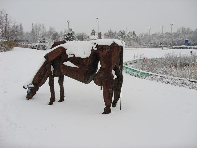 Cow, Great Western Hospital, Swindon