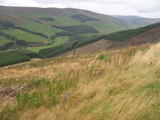 Clear fell area, Caberston Forest