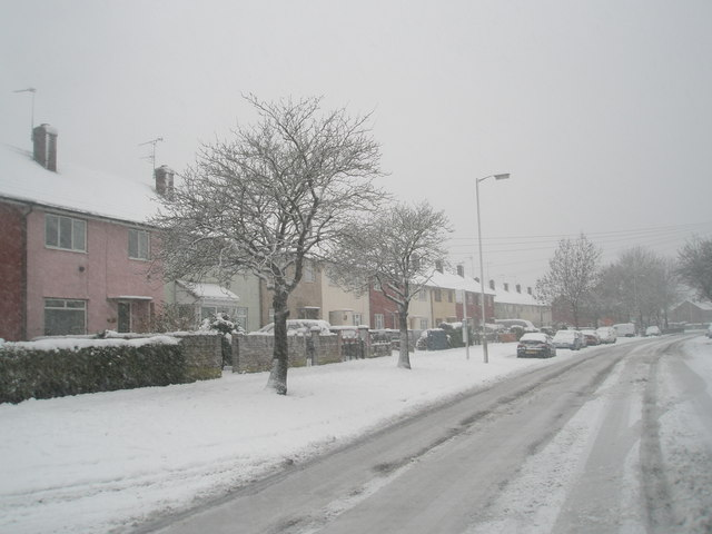 Winter trees in Barncroft Way