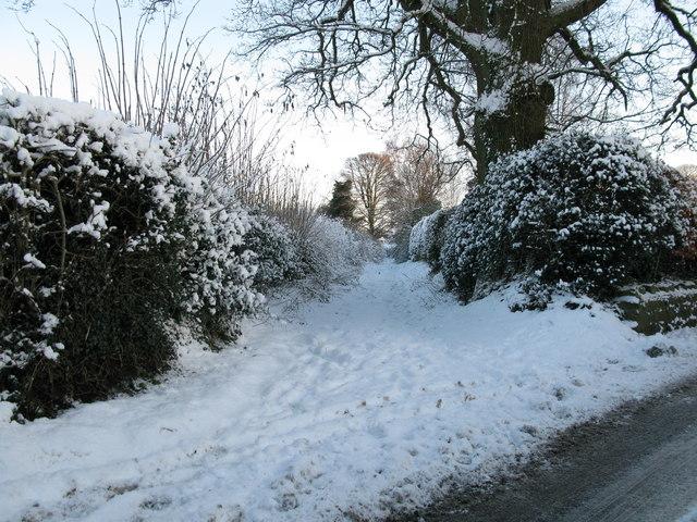 Back Lane, Sharow