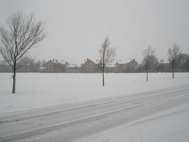 Winter trees in Stockheath Lane