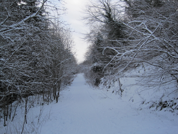 Great North Forest Trail