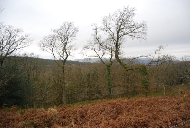 Old growth woodland, Withycombe Scruffets