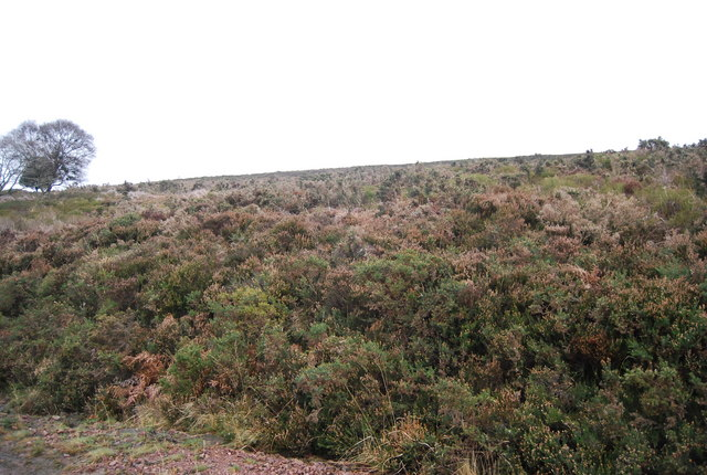 Moorland vegetation, Black Hill