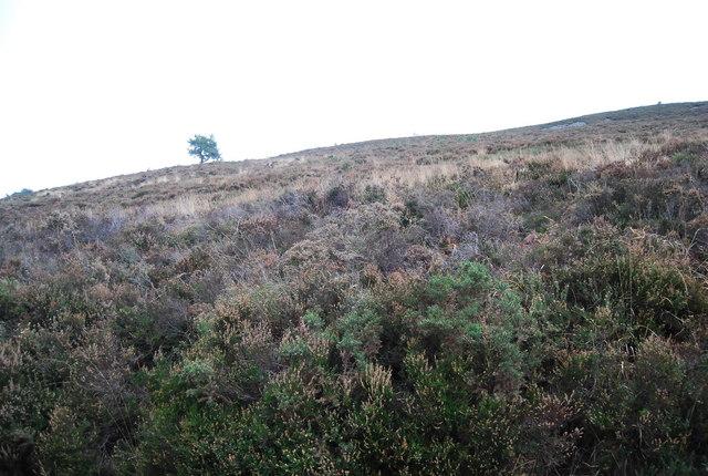 Moorland, Black Hill