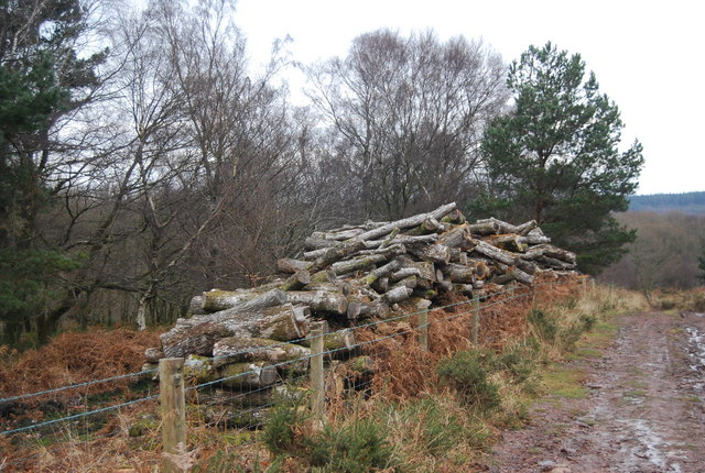 Log pile, Withycombe Scruffets