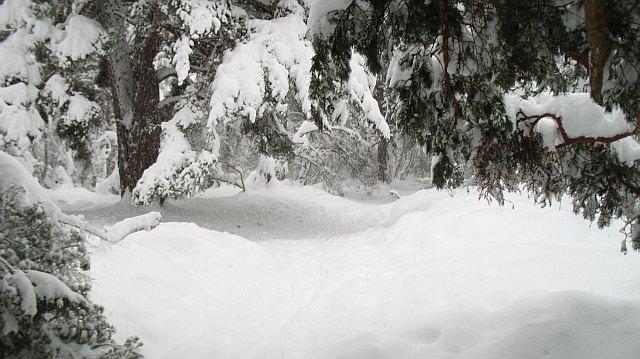 Path, Rothiemurchus Forest