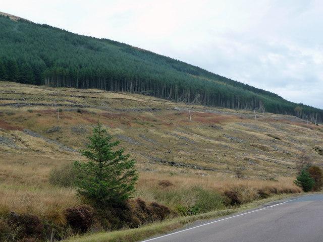 Clachaig Forest