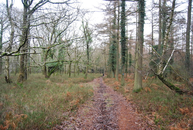 Bridleway through Withycombe Scruffets