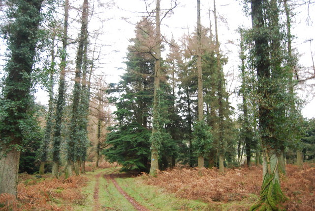 Track in Withycombe Scruffets