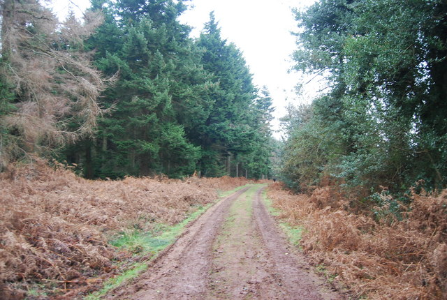 Track into Dunster Forest