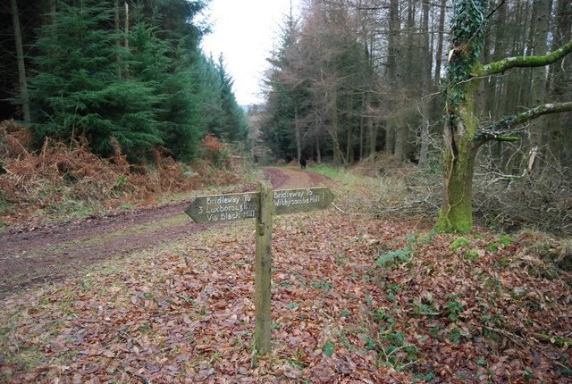 Bridleway Sign Post, Dunster Forest