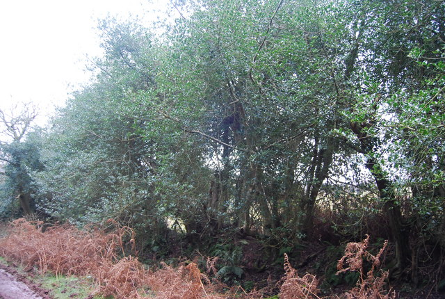 The edge of Withycombe Scruffets
