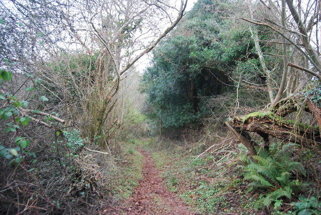 Bridleway along the edge of Withycombe Scruffets