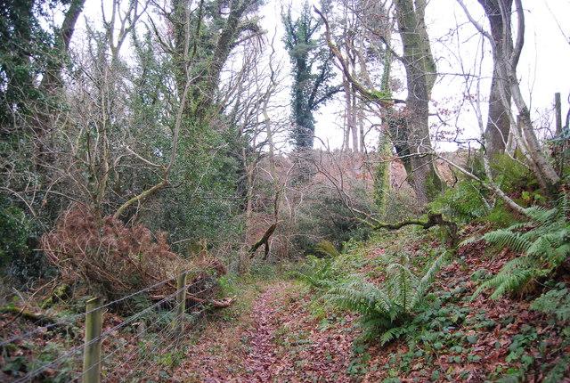 Bridleway descending to Witches Alder