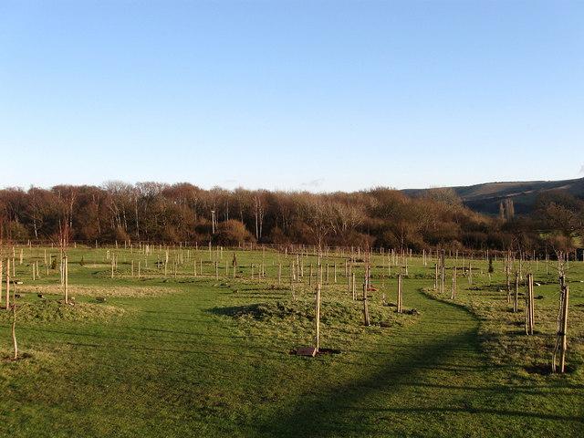 Clayton Wood Natural Burial Ground