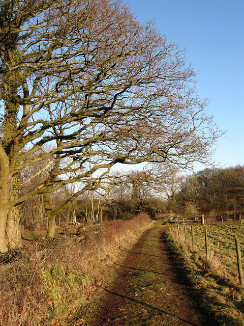 Footpath, Bonny's Wood