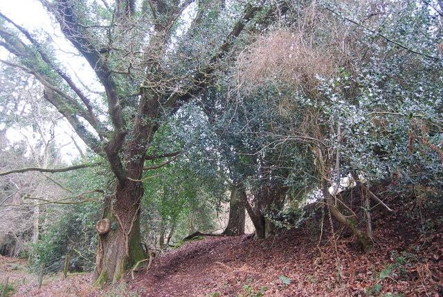 Bridleway, Witches Alders
