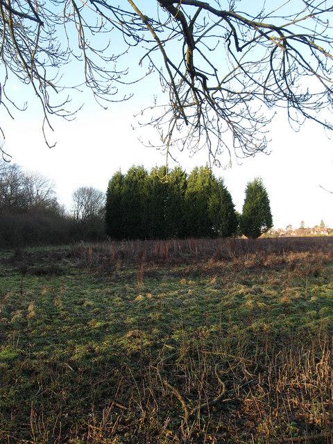 Wood Field (1)