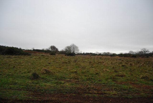 Rough grassland near Withycombe Hill