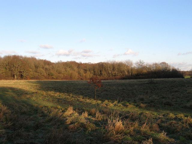Wood Field (2)