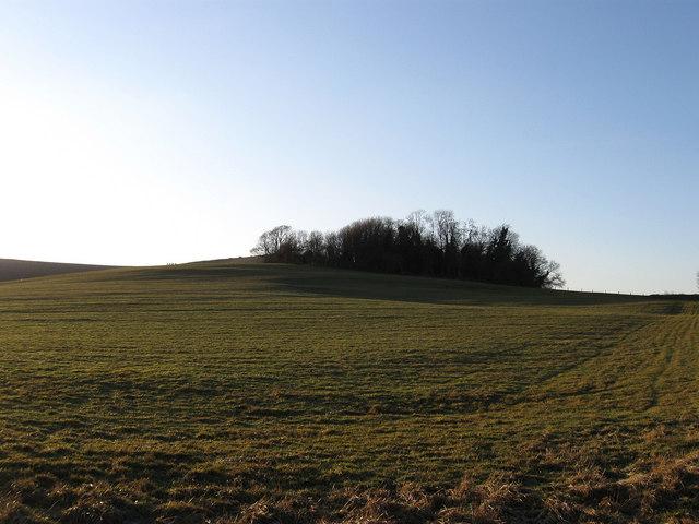 Pit Field