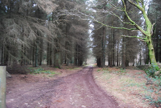 Track through the woods, Aller Hill