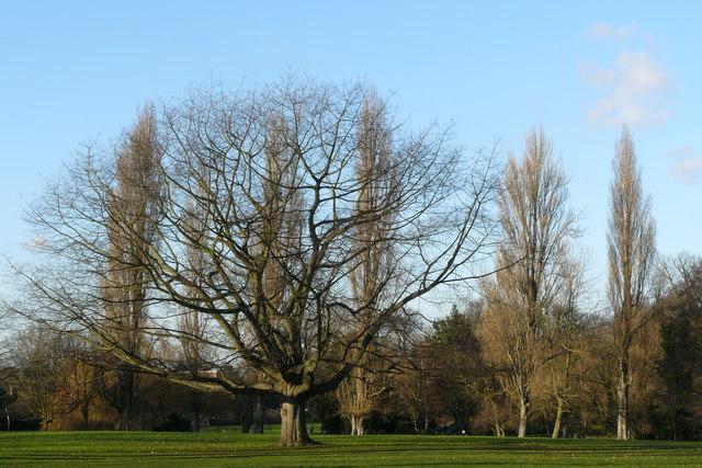 Parkland in Beddington Park, Surrey