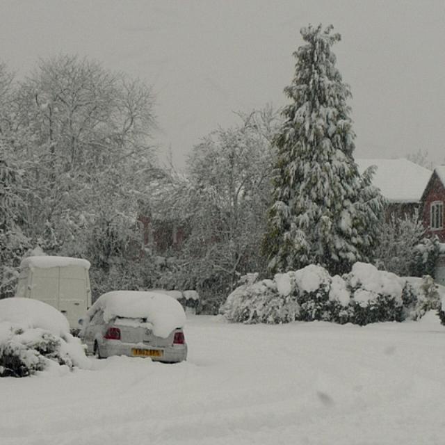 Suburban Reading in the snow